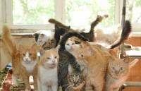 Калининградские пожарные спасли пенсионерку и 20 кошек