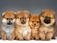 В Тюмени приставы вывезли из квартиры около 100 породистых собак, страдавших от жестокого обращения