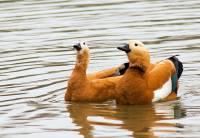 В нижегородском зоопарке посетитель убил редкую птицу