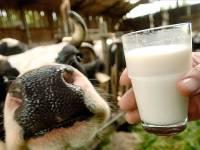 Ткачев посоветовал белорусам подыскивать новые рынки сбыта молока