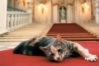 В Петербурге проходит праздник в честь котов Эрмитажа
