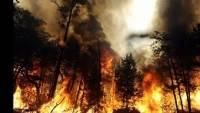 В Бурятии два лесника погибли, пытаясь потушить пожар