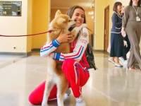 Алине Загитовой вручили щенка акита-ину, доставленного из Японии
