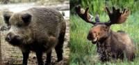 На дорогах Ленобласти животные устроили за год более 160 аварий