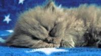 Ученые выяснили, сколько надо спать, чтобы продлить жизнь
