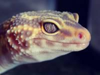 В Китае открыли новый вид экзотической рептилии