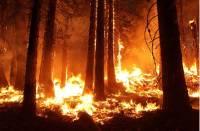 В Эстонии в районе падения ракеты НАТО начался пожар