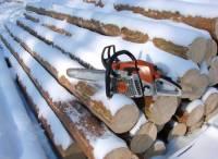 В Томской области при задержании погиб «черный лесоруб»