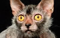 Правительство РФ позаботится о подвальных котах