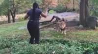 Полиция Нью-Йорка разыскивает женщину, которая проникла в вольер со львом