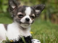 Ученые уточнили формулу сравнения возраста собак с человеческим