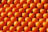 В Москве у дальнобойщика похитили около 18 тонн мандаринов
