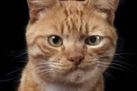 Ученые: женщины лучше распознают мимику кошек