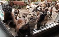 Жительница Тюмени оставила дочь на неделю в компании 30 грязных и больных кошек