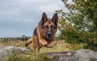 МВД сократило число потенциально опасных пород собак