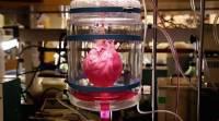 В Израиле впервые в мире напечатали живое сердце на 3D-принтере