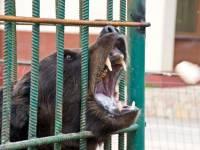 Под Волгоградом полиция ищет медведицу, сбежавшую от егеря
