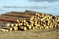 В Ленобласти на деревообрабатывающем предприятии погибла гражданка Китая