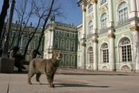 В Петербурге вновь проходит День эрмитажного кота