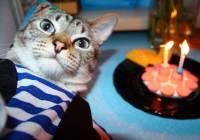 В Великобритании решили всей деревней отпраздновать юбилей кота