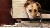 Зоозащитники спасают собак и кошек в подтопленном Тулуне