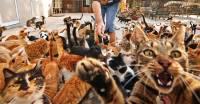 Японцев обяжут чипировать домашних питомцев