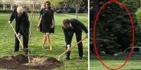 Дуб, посаженный Трампом и Макроном у Белого дома, погиб