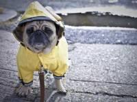 Гидрометцентр: август будет аномально холодным