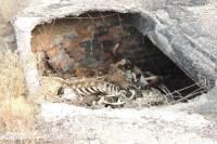 Под Волгоградом чиновник погиб, провалившись в скотомогильник