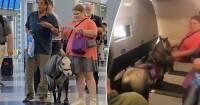 Американка взяла с собой пони на борт самолета