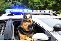 В Германии мигрант искусал полицейского и служебную собаку