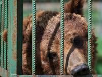 В Шанхае медведи растерзали работника зоопарка на глазах у посетителей