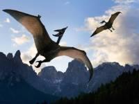 Птерозавры учились летать на протяжении многих миллионов лет