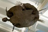 В Венесуэле найдены останки трехметровой доисторической рогатой черепахи