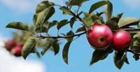 Экипаж «Союза МС-13» просит доставить к месту посадки яблоки