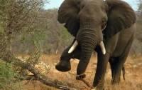 В Китае слоны совершили набег на магазин, выпив 30 литров вина