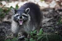Жители Приморья подкармливают питомцев зоопарков, закрытых из-за пандемии