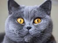 В Ухане оставленная на 40 дней кошка родила котят и выловила всех рыбок из аквариума