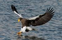 В Швецию из Московского зоопарка доставлен самый большой орел в мире