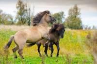 В Казахстане молнией убило табун лошадей