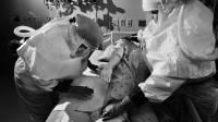 В Китае и Монголии выявлены случаи заражения бубонной чумой