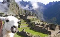 В озере Титикака найден ларец эпохи инков со статуэткой ламы