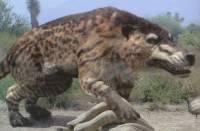 Ученые исследовали ДНК вымерших ужасных волков