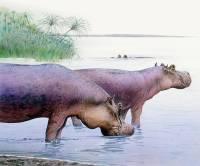 В Англии найдены останки гигантских бегемотов