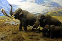 Ученым удалось извлечь ДНК из зубов российских мамонтов возрастом в 1,2 млн лет