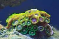 Ученые впервые пересчитали кораллы в Тихом океане