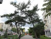 В Челябинске возбудили уголовное дело по факту сноса исторического дерева