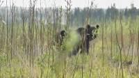 Под Красноярском убили медведя, растерзавшего туриста в нацпарке