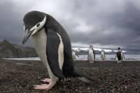 В Новой Зеландии найдены окаменелости гигантского пингвина