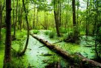 В ХМАО при падении гидросамолета в болото погибли два человека
